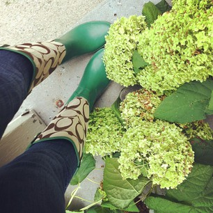 As I was trimming my garden down for the fall this weekend it began to sprinkle, giving me the perfect excuse to wear my adorable new rain boots.