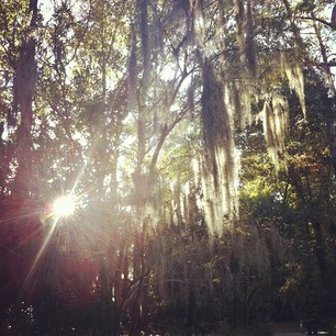 I just can't get over all of this magical Spanish Moss...