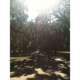 Boone Hall's drive took my breath away.